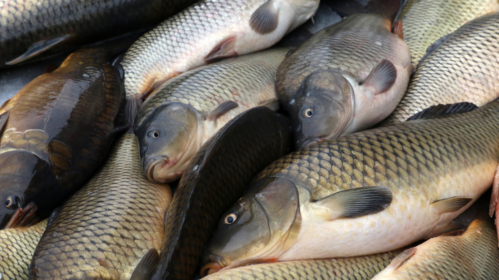 Свежая рыба для ухи